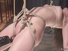 Hogtied suspended darkhaired twat toyed