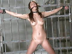 Dirty slave girl Diana Stewart enjoys unrefined tortured with toys